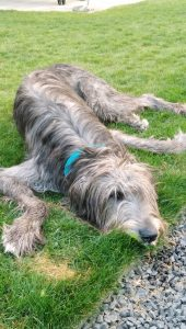 Esther-Kuba-Hund